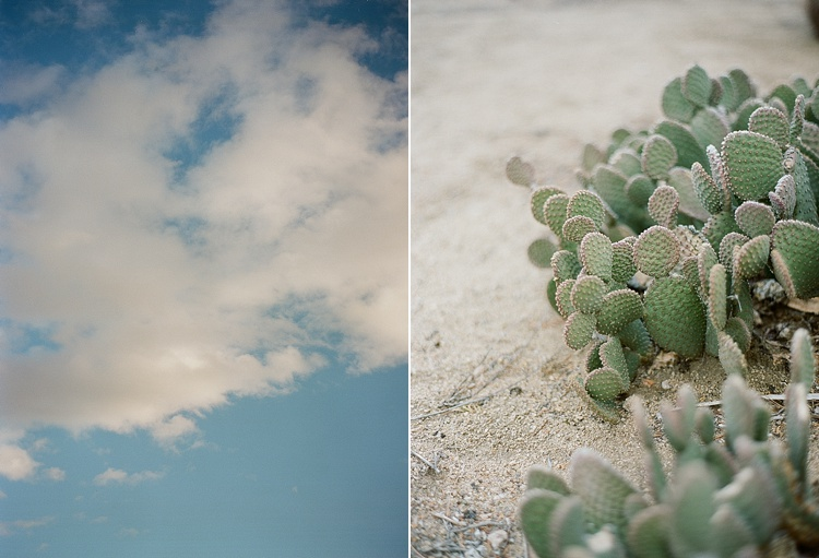 Road Trip to Joshua Tree with Acres of Hope Photography